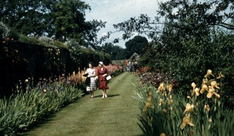 Archive 1950s Percy Cane Garden